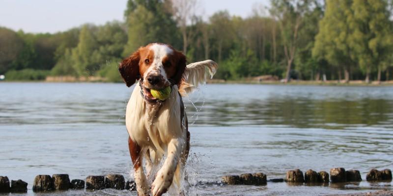 hond-recreatieplas.JPG